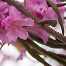 Spring in Arcadia by Jordan Selha