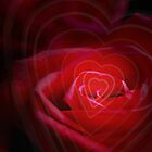 Heart of the Rose and Bokeh by EmilyFNM3D