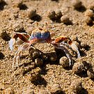 Sand Crab with his boulders on Australian Beach by EmilyFNM3D