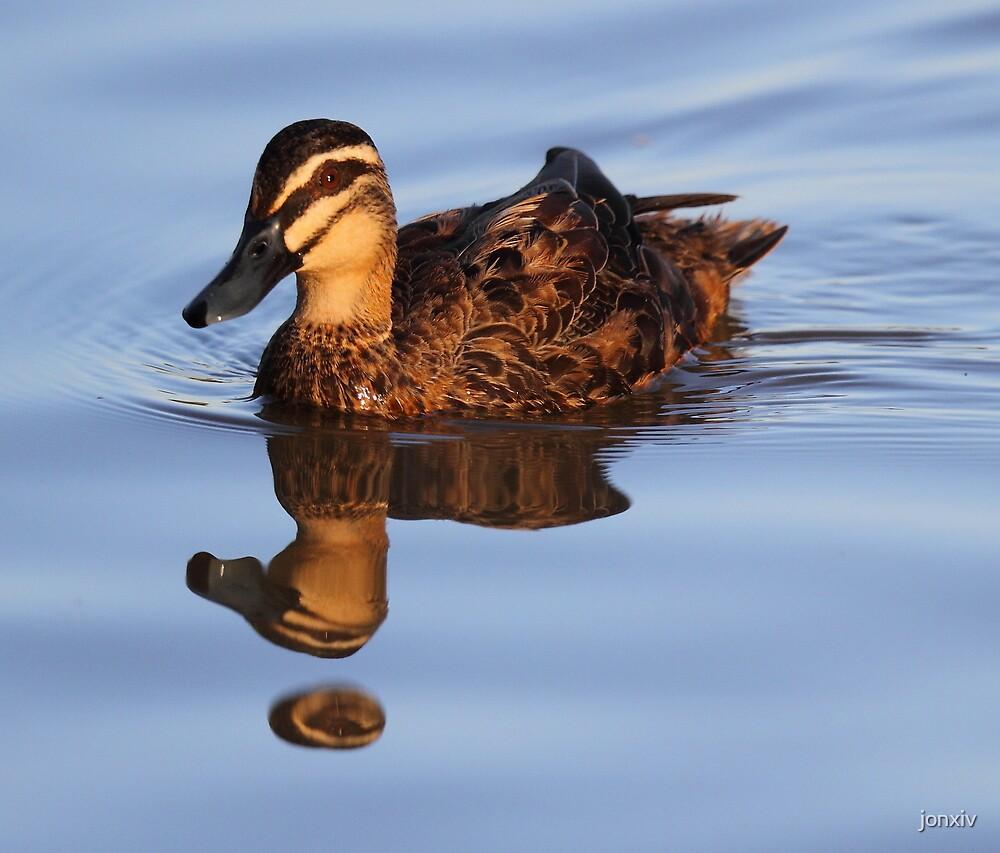 """Strange Fowl Reflections"" by jonxiv"