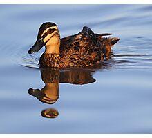 """Strange Fowl Reflections"" Photographic Print"
