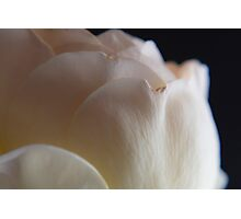 Planet Rose Photographic Print