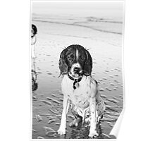 benson on beach Poster
