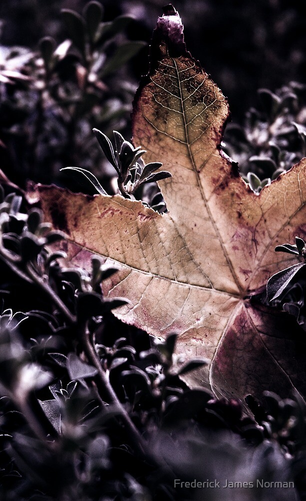 Autumn Leaf... by Frederick James Norman