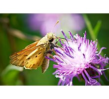 Fiery Skipper Photographic Print
