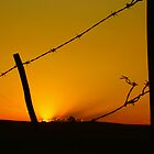 barbed by Vinchenso