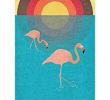 Flamingos Photographic Print