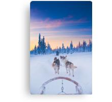 Husky Sledge, Lapland Canvas Print