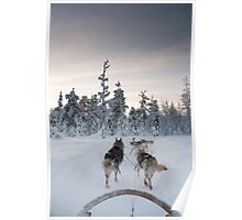 Husky Sledge, Lapland Poster