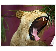 A Lioness Roars Poster