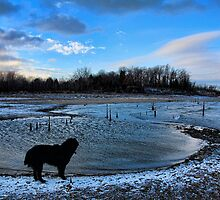Too Cold To Go Swimming... by Carolyn  Fletcher