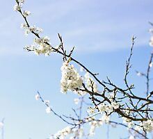 White blossom by NaomiGrace