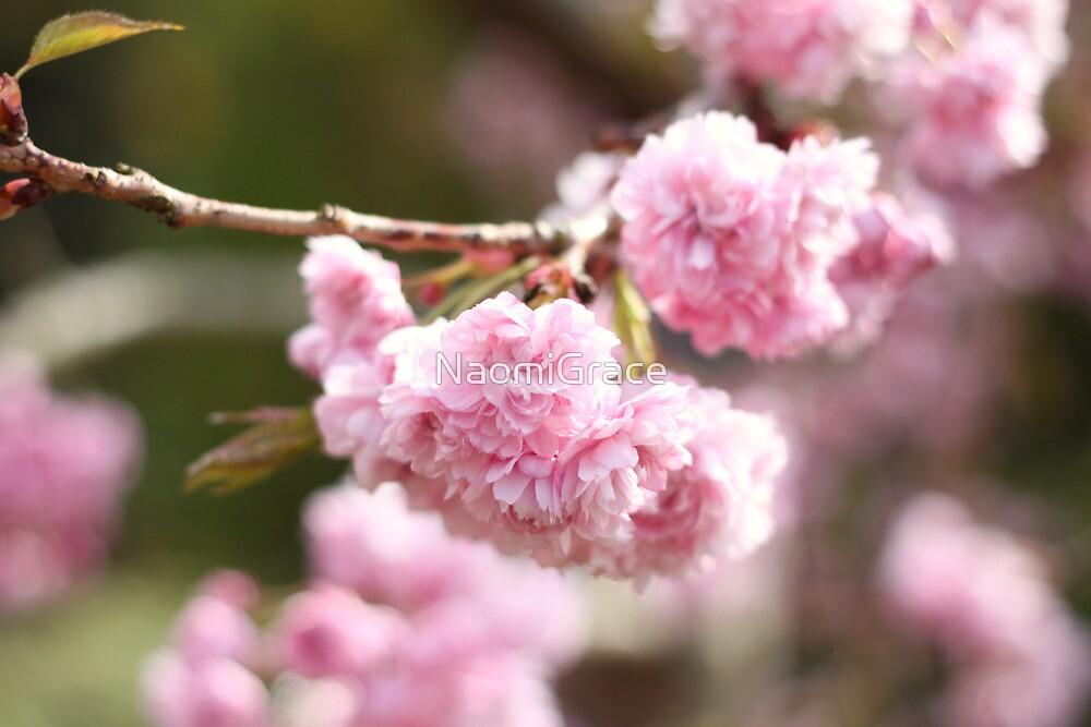 Cherry blossom by NaomiGrace