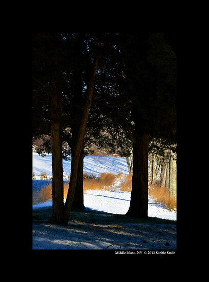 Snow Path By The Bartlett Pond  by © Sophie W. Smith