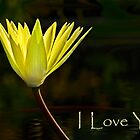 Valentine card - Yellow waterlily by cclaude
