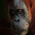 Eyes of the Orangutan by Dennis Stewart