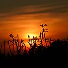 Sunset at Algarve by Soniris