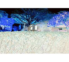 The neighbor's hedge Photographic Print