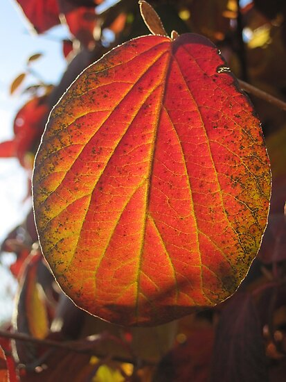 Color of Fall by sunsetgirl
