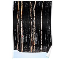 Some Birch Trees Poster