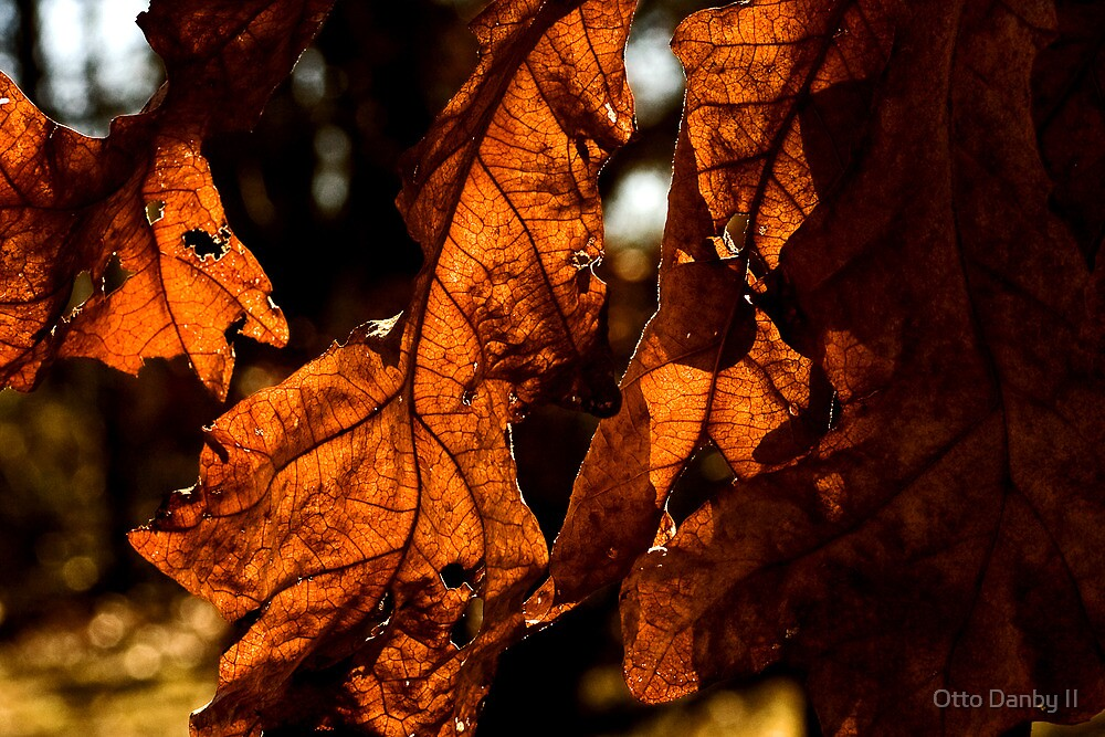 Layers of Leaves and Light by Otto Danby II