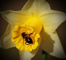 A Bee in January by rubyrainbow