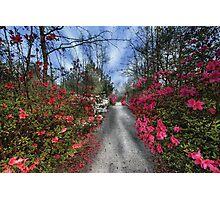 Cypress Gardens - Spring Photographic Print
