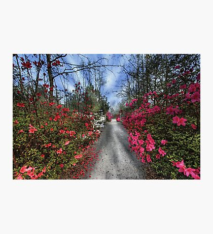 Cypress Gardens - Spring Photographic Print