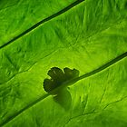 Butterfly Silhouette on Leaf by diamondphotogal
