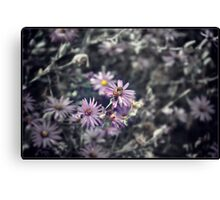 Calm Beauty Canvas Print