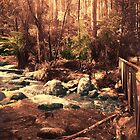 Toorongo River, Noojee by Roz McQuillan