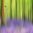 The bluebell wood by Lyn Evans