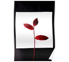 Deep red Autumn Poster
