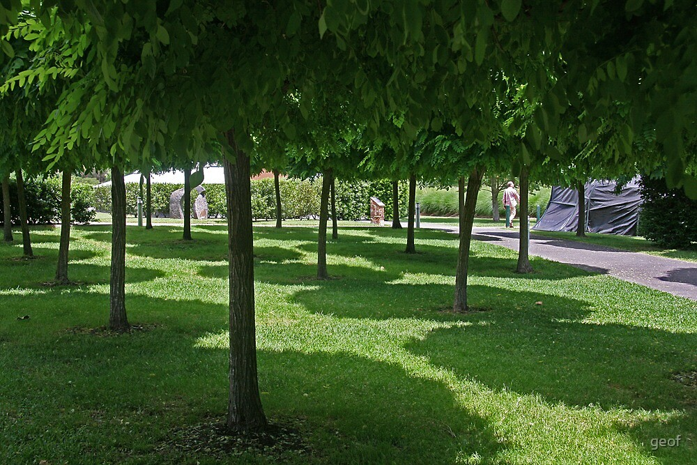 as a vineyard, they produce a nice ornamental tree by geof