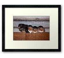 4 Little Birds Framed Print
