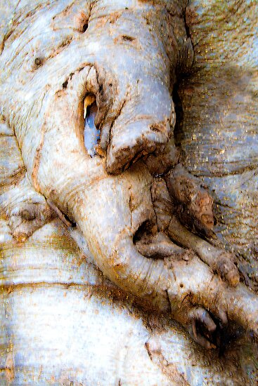 Tree Bark Forming Gruesome Face. Straight photo. Not manipulated at all. by ronsphotos