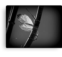 A Strong Attachment Canvas Print