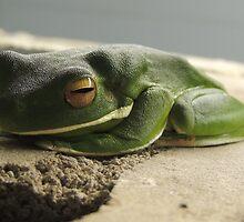 White-lipped Green Tree Frog by DavidMarshall
