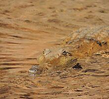 Freshwater Crocodile by DavidMarshall