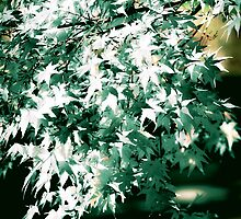 Green and White Leaves by Kellice
