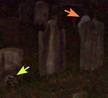 Interesting Finds In the Sleepy Hollow Cemetery by Jane Neill-Hancock