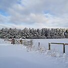 Snow in the uk by Robert  Taylor