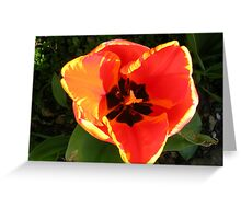 Tulip centre Greeting Card
