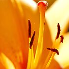 ORANGE LILY Macro by AnnDixon