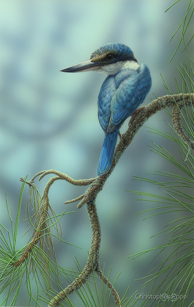 Sacred Kingfisher & Pine  by Christopher Pope