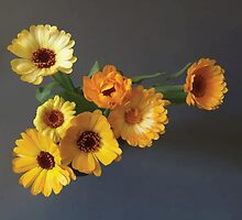 Gerbera bouquet by Adrian Bud