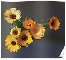 Gerbera bouquet Poster