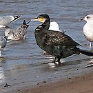 Cormorant ?? and Friends by Lilian Marshall