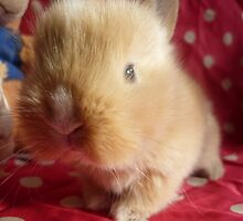 Baby rabbit by blackfoxy