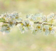 basking blossoms by Teresa Pople